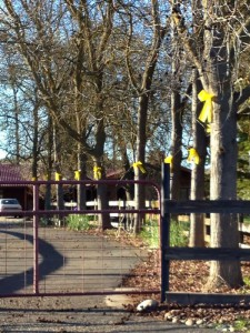 Yellow ribbons welcoming Nathan home after his release